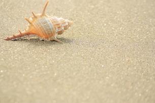 浜辺の写真素材 [FYI00455090]