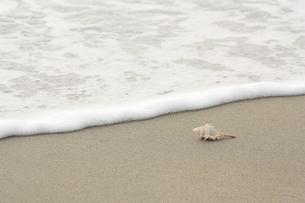 浜辺の写真素材 [FYI00455093]