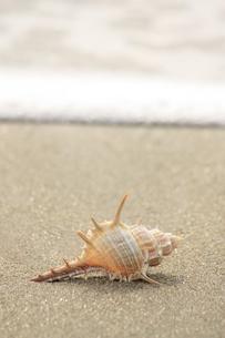 浜辺の写真素材 [FYI00455094]