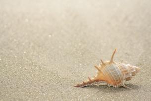 浜辺の写真素材 [FYI00455096]
