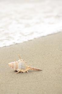 浜辺の写真素材 [FYI00455098]
