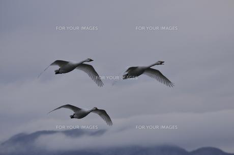 湖上の雲景の写真素材 [FYI00455383]