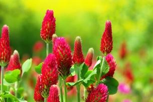 紅い花の写真素材 [FYI00455694]