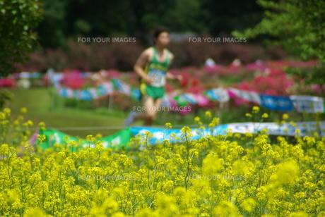 菜の花マラソンの写真素材 [FYI00455699]