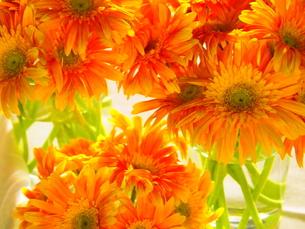 オレンジの花の写真素材 [FYI00455731]