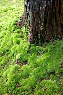苔の庭の写真素材 [FYI00455816]