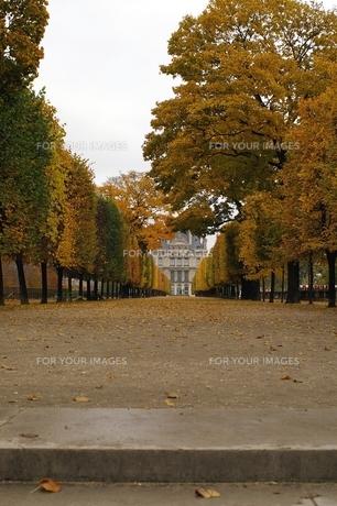 パリの紅葉の素材 [FYI00455892]