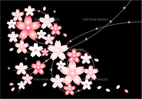 夜桜のイラストの素材 [FYI00456032]