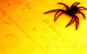 蜘蛛の写真素材 [FYI00456041]