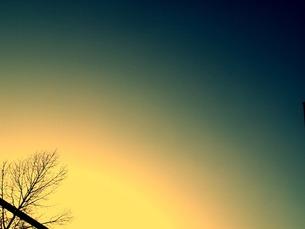 夕暮れの木の写真素材 [FYI00456044]