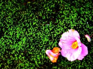 緑の絨毯に座る花の写真素材 [FYI00456049]