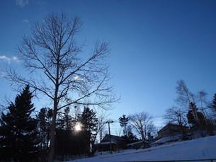 木と青空の写真素材 [FYI00456059]