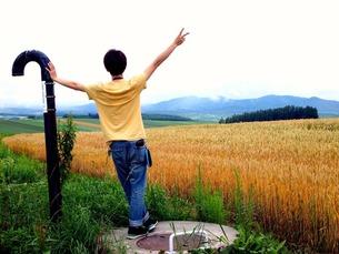 黄色畑の写真素材 [FYI00456071]