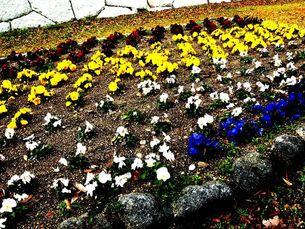 花の写真素材 [FYI00456073]