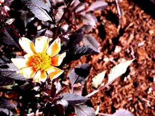 秋の花の写真素材 [FYI00456076]