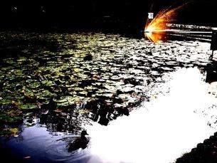 水面に浮かぶ光の写真素材 [FYI00456086]