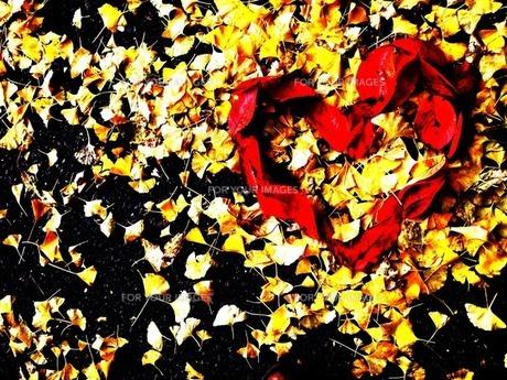 秋のハートの写真素材 [FYI00456088]