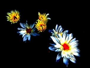 影に浮かぶ花の写真素材 [FYI00456098]