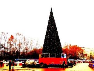 クリスマス・ツリーの写真素材 [FYI00456099]