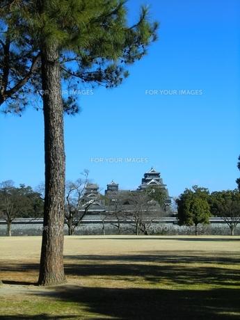 二の丸公園から望む熊本城天守閣の写真素材 [FYI00456118]