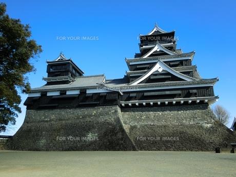熊本城天守閣の写真素材 [FYI00456123]
