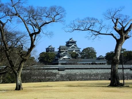 二の丸公園から望む熊本城天守閣と宇土櫓の写真素材 [FYI00456133]