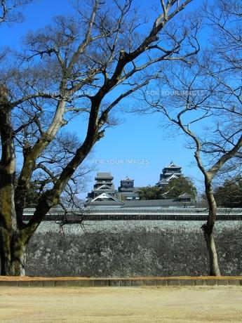 二の丸公園から望む熊本城天守閣と宇土櫓の写真素材 [FYI00456134]