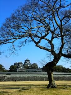 二の丸公園から熊本城天守閣を望むの写真素材 [FYI00456145]