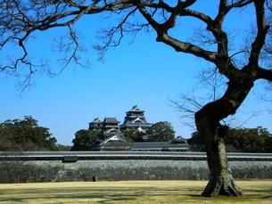二の丸公園から望む熊本城天守閣と宇土櫓の写真素材 [FYI00456146]