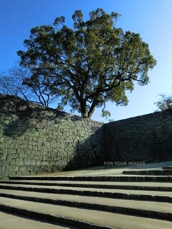 熊本城の石垣と大楠の写真素材 [FYI00456147]