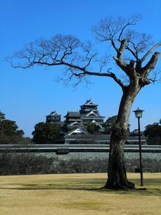 二の丸j公園から熊本城天守閣を望むの写真素材 [FYI00456152]