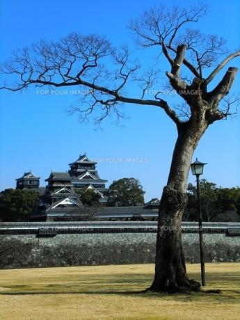 二の丸公園から望む熊本城天守閣と宇土櫓の写真素材 [FYI00456157]
