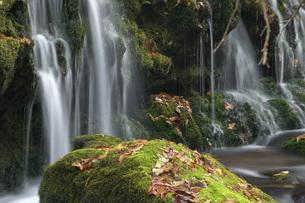 落葉と渓流の石と伏流水の写真素材 [FYI00456282]
