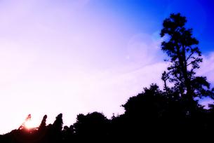 逆光の写真素材 [FYI00456447]