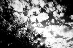 雲の写真素材 [FYI00456473]