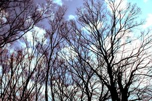 木々の写真素材 [FYI00456483]