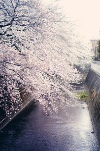 神田川の写真素材 [FYI00456531]