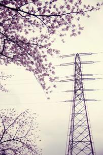 春の鉄塔の写真素材 [FYI00456535]