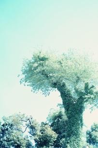 greenの写真素材 [FYI00456572]