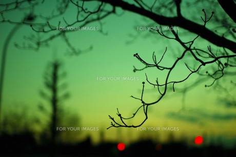 夕焼けと枝のシルエットの素材 [FYI00456641]