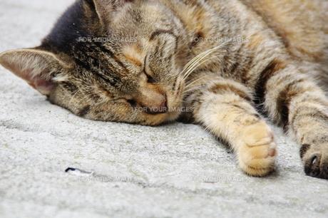 とある猫のお昼ね姿 2の写真素材 [FYI00456670]