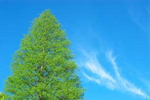 新緑と青空の写真素材 [FYI00456699]