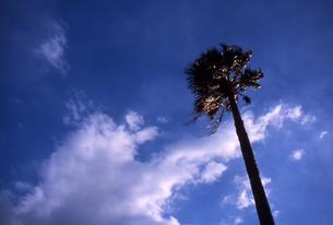 海風にたなびく木の写真素材 [FYI00456703]