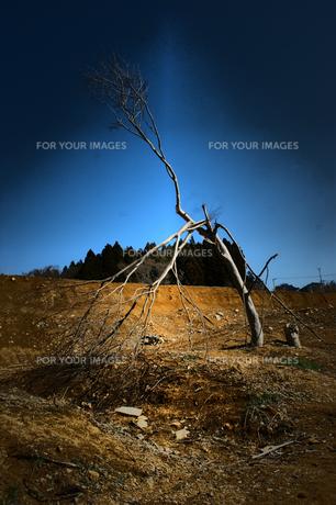 津波に耐えた樹の素材 [FYI00456706]