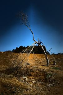 津波に耐えた樹の写真素材 [FYI00456706]