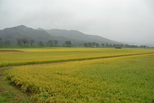 雨の遠野地方の写真素材 [FYI00456751]