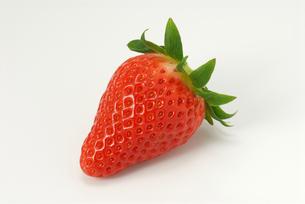 1粒のいちご ビーナスベリーの写真素材 [FYI00456763]
