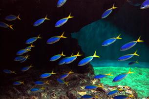 光る魚たちの写真素材 [FYI00456935]