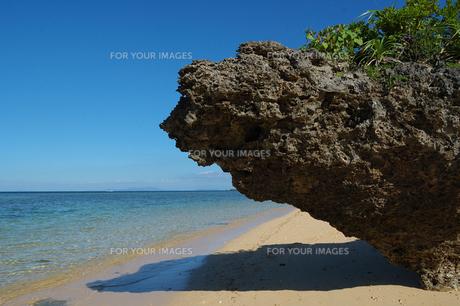 珊瑚岩の写真素材 [FYI00457003]