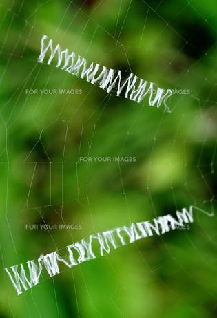 WWW netの写真素材 [FYI00457035]